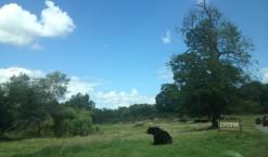 Un voyage au cœur de l'Afrique avec safarivo.com