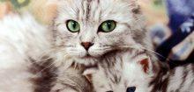 Comment retrouver un chat ?